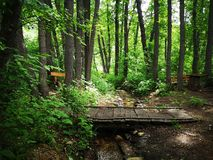 Wooden crossing over a stream in a mountain forest royalty free stock photos