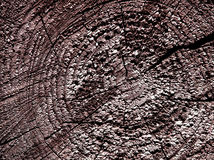 Wooden cut. Rough wooden cut texture with tree rings Royalty Free Stock Images