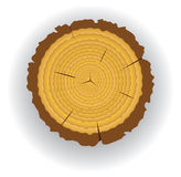 Wooden cut. Vector wooden cut clip-art of a pine royalty free illustration