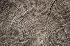 Wooden cut background Stock Photos