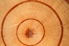 Wooden cut detail and texture Royalty Free Stock Photos