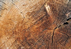 Wooden cut Stock Image