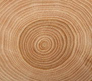 Free Wooden Cut Texture Stock Image - 14174401
