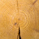 Wooden cut texture Stock Photos