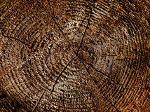 Wooden cut texture Royalty Free Stock Photo