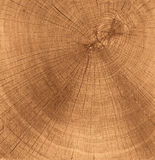 Wooden cut texture Royalty Free Stock Image