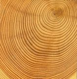 Wooden cut texture Stock Photography