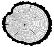 Wooden cut of a tree log, vector. Black and white wooden cut of a tree log with concentric rings and bark, vector Stock Photos