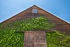 Wooden dark house gable leaf climber and sky stock image