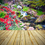 Wooden deck floor and Red Rhododendron flowers Stock Photo