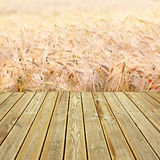 Wooden deck floor and wehat field. Striped wooden plank deck with view to wheat field background Stock Photos
