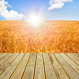 Wooden deck floor and wheat field Royalty Free Stock Images
