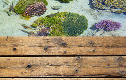 Wooden deck in front of sea colorful corals and fish Stock Photo