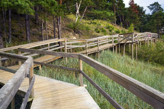 Wooden deck in the wood. With observation decks. Latvia stock photos