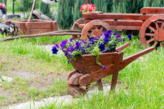 Wooden decorative flower bed truck serves for flowering petunia. Design solution for the design of flower beds. Stock Photography