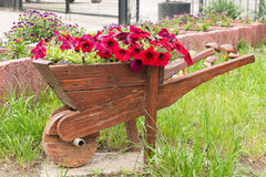 Wooden decorative flower bed truck serves for flowering petunia. Design solution for the design of flower beds. Pink and White petunias on the flower bed along royalty free stock image