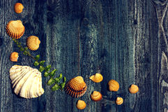 Wooden desk with sea shells Stock Image