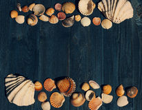 Wooden desk with sea shells Stock Photos