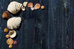 Wooden desk with sea shells Royalty Free Stock Photos