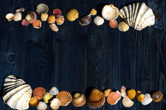 Wooden desk with sea shells Royalty Free Stock Photography
