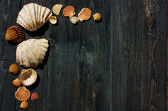 Wooden desk with sea shells Stock Images