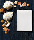 Wooden desk with sea shells and white notepad Stock Photography
