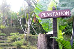 Wooden direction signpost with plantation word. In Bali, Indonesia stock photo