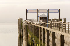 Wooden Dock with Birds Sitting on it Royalty Free Stock Image