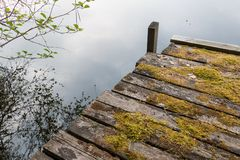 Wooden dock covered by moss at a calm lake. Old wooden dock made of boards covered by moss at a calm lake Royalty Free Stock Photography