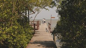 Wooden Dock in Forest Leading to the Sea stock photography