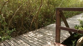 Wooden Dock in Forest - Sunny Path royalty free stock photography