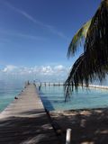 Wooden Dock at Mexican Caribbean Sea Stock Photo