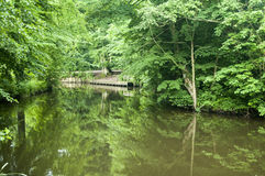Wooden dock next to brown river. Green summer day next to the river outside of the city Royalty Free Stock Photo