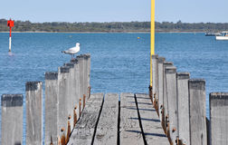 Wooden Dock with Sea Gull Royalty Free Stock Photos