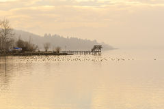 Wooden Dock During Winter With Ducks Royalty Free Stock Photos