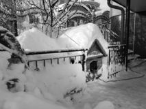 Dog house in winter stock photos