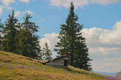 Wooden doghouse on mountains. Wooden doghouse on a green meadow at mountains Stock Photos