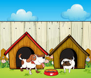 Wooden doghouses inside the wooden fence Royalty Free Stock Image