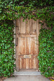 Wooden door with green leaves Stock Images