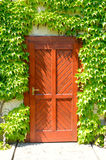 Wooden door at home, wrapped in thick greenery Stock Images
