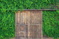 Wooden door and wall covered with vines Stock Photography