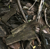 Wooden dry sliver firewood. Bark background royalty free stock photos