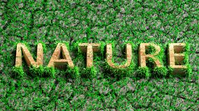 Wooden Eco word with grass Royalty Free Stock Image