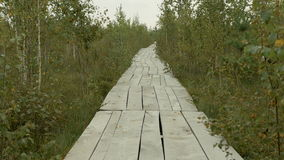 Wooden ecotrail in the national park reserve. Autumn daytime. Smooth dolly shot.  stock video footage