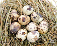 Wooden eggs. Tree wooden eggs with beautiful pattern lie on a white backround Stock Image