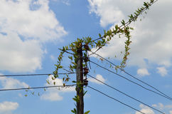 Wooden electrical pole with climber against blue sky Stock Photography
