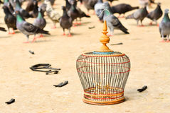 Wooden empty bird cage and pigeons Royalty Free Stock Photos