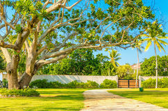 Wooden entrance among exotic trees Stock Photos
