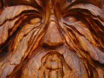 Wooden Face. A digital image of a face carved out of a tree trunk stock photo
