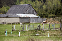 Wooden farm with horse and goat next to the forest Stock Photography